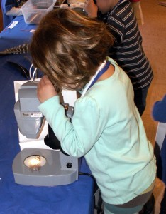 Checking out feathers under a microscope.