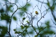 Birds-01